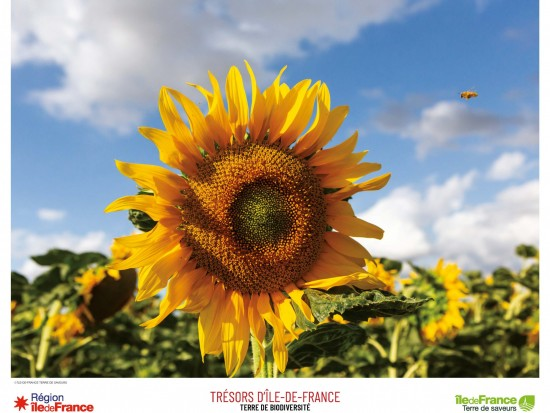 Tournesol Ile-de-France
